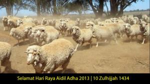 aidiladha2013
