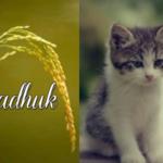 Tazkirah Ramadhan | Melatih Hati Bersifat Tawaduk